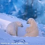 Phototwo_bears_5
